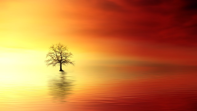 Distant tree over water at sunset